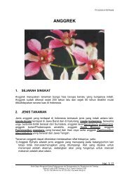 Budidaya Tanaman Anggrek - Beranda | Dinas Pertanian DIY ...