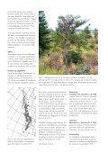 Rapport 2004-0027. Abies amabilis til juletræer - hvad - Naturstyrelsen - Page 2