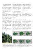 Rapport 2004-0027. Abies amabilis til juletræer - hvad - Naturstyrelsen - Page 4
