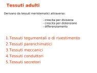 8 I tessuti adulti (1).pdf - Autistici