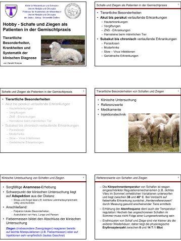 Hobby - Schafe und Ziegen als Patienten in der Gemischtpraxis