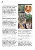 Caracterização molecular de fungos entomopatogênicos ... - Embrapa - Page 2