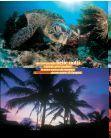 La Polinesia - Viaggi Sub di Originaltour - Page 5