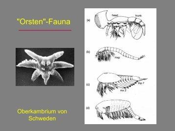 """Orsten""-Fauna"