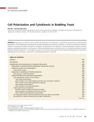 Cell Polarization and Cytokinesis in Budding Yeast
