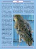 arricciato del Nord - Page 2