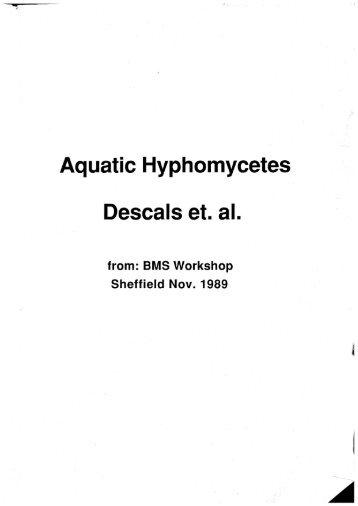 Hyphomycetes Classification Essay img-1