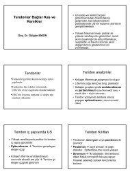 Tendonlar Bağlar Kas ve Kemikler Tendonlar Tendon anatomisi ...