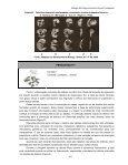 Biologia do Desenvolvimento Animal Comparado - UFPB Virtual - Page 5