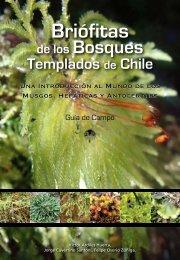 Las Briófitas - Corma Bio Bio