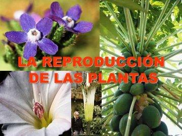 """la reproducción de las plantas - ies """"poeta claudio rodríguez"""""""