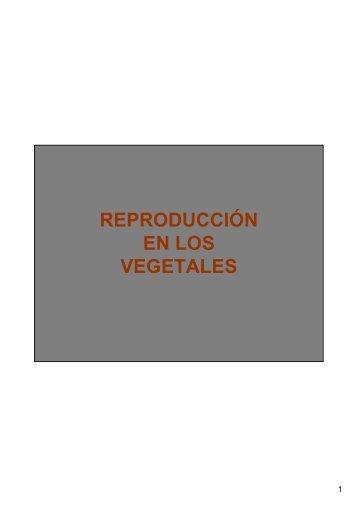 REPRODUCCIÓN EN LOS VEGETALES