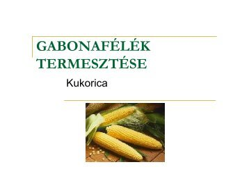 A kukorica termesztése - pkkft.hu