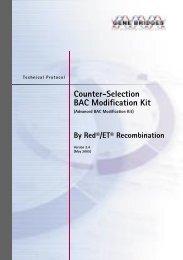 Counter-Selection BAC Modification Kit - Bioxys