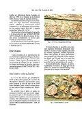 Localización en España de Diaspis Coccois (Lichtenstein 1882 ... - Page 3
