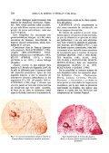 Localización en España de Diaspis Coccois (Lichtenstein 1882 ... - Page 4