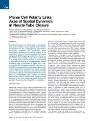 Planar Cell Polarity Links Axes of Spatial Dynamics in Neural-Tube ...