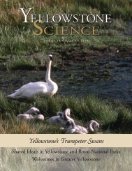 Yellowstone's Trumpeter Swans - National Park Service