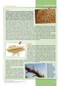 Schede descrittive di alimenti di origine vegetale - Clitt - Page 4