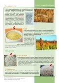 Schede descrittive di alimenti di origine vegetale - Clitt - Page 5