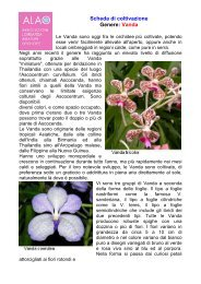 Scheda di coltivazione Genere: Vanda