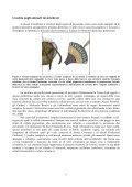 Neurofisiologia dell'occhio umano: organo ... - Neuroscienze.net - Page 6