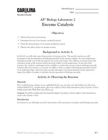 Formal lab report on enzymes