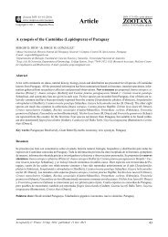 A synopsis of the Castniidae (Lepidoptera) of ... - FAUNA Paraguay