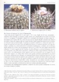 il Genere Stenocactus (K. Schumann) A. Berger - Director of the ... - Page 4