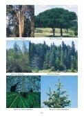 Resim 1: Kızılçam Resim 2/a: Karaçam Resim 2/b: Ehrami Karaçam ... - Page 2
