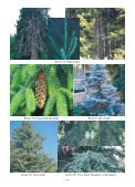 Resim 1: Kızılçam Resim 2/a: Karaçam Resim 2/b: Ehrami Karaçam ... - Page 3