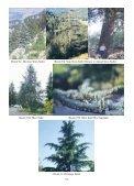 Resim 1: Kızılçam Resim 2/a: Karaçam Resim 2/b: Ehrami Karaçam ... - Page 4