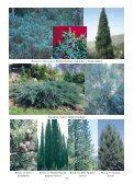 Resim 1: Kızılçam Resim 2/a: Karaçam Resim 2/b: Ehrami Karaçam ... - Page 5