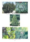 Resim 1: Kızılçam Resim 2/a: Karaçam Resim 2/b: Ehrami Karaçam ... - Page 6
