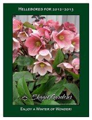 Helleborus Varieties - Skagit Gardens