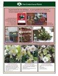 Helleborus Varieties - Skagit Gardens - Page 3