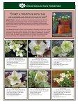 Helleborus Varieties - Skagit Gardens - Page 4