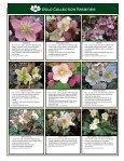 Helleborus Varieties - Skagit Gardens - Page 5