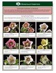 Helleborus Varieties - Skagit Gardens - Page 6