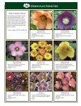 Helleborus Varieties - Skagit Gardens - Page 7