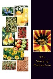 The Story of Pollination (PDF) - National Honey Board