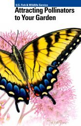 Attracting Pollinators to Your Garden - U.S. Fish and Wildlife Service