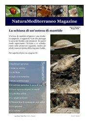 Magazine n.2 - Natura Mediterraneo