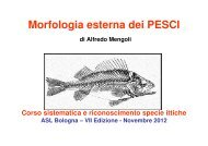 Morfologia esterna dei PESCI - AUSL Città di Bologna