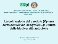 La coltivazione del carciofo - Regione Marche