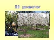 Il Pero - luigigarioni