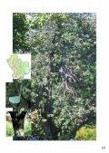 Salice bianco - Sorbo selvatico - Page 6