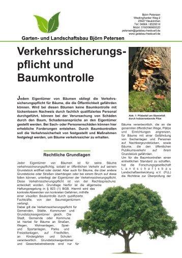 Baumkontrolle nach FLL - sylt-galabau.de
