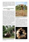Baumkontrolle nach FLL - sylt-galabau.de - Seite 2