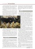 Maquetación 1 - Semex Alliance - Page 6